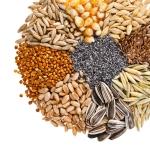julRye, Wheat, Barley, Oat, Sunflower, Corn, Flax, Poppshutta (2)
